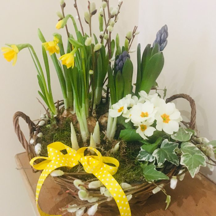 Stogumber Spring planter