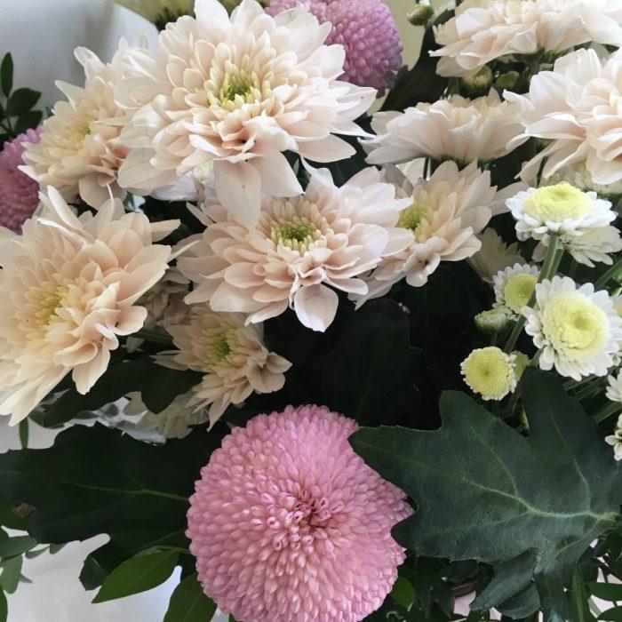 Just Chrysanthemums