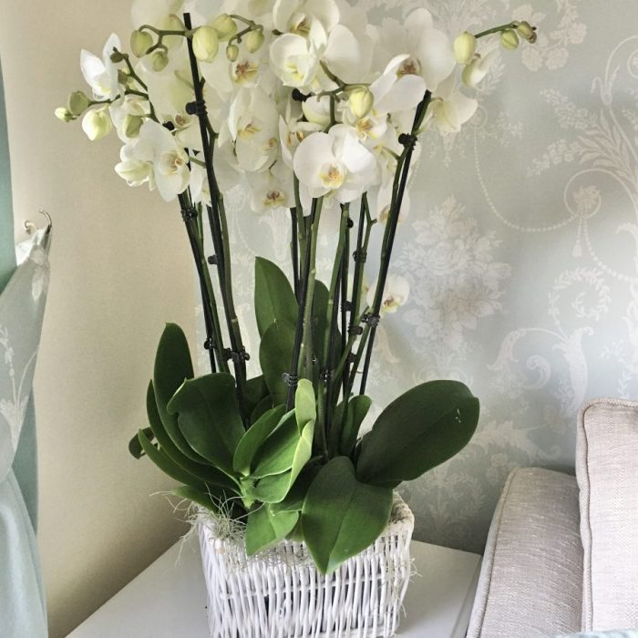 Oakdene Orchid Planter