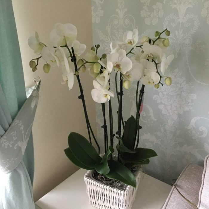 Orchid Oakdene Planter