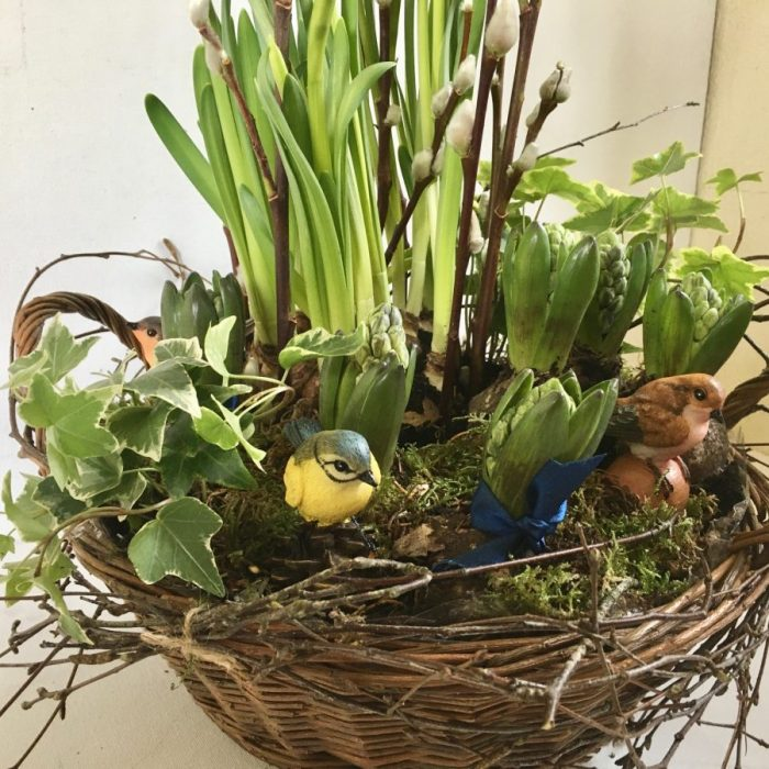 Spring Bulb and Bird Planter